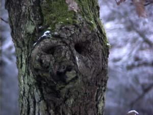 face-n-tree