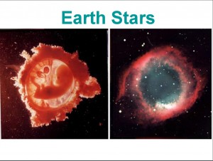 fetus and stars
